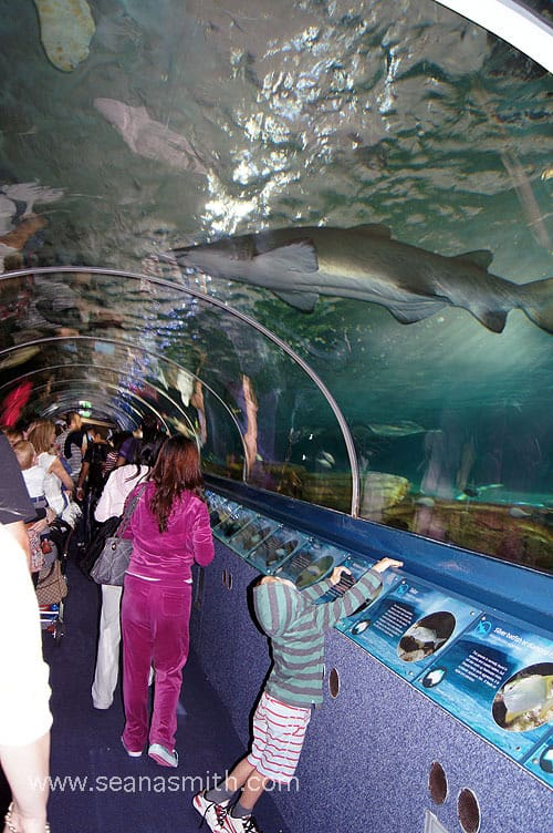 Sydney Aquarium, Darling Harbour – Sydney's Best Animal Encounters