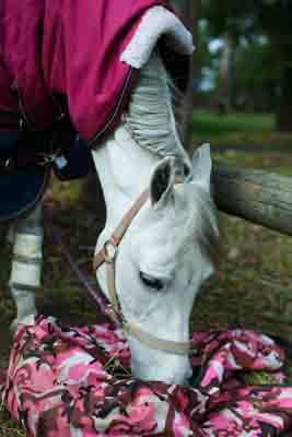 sydney pony rides