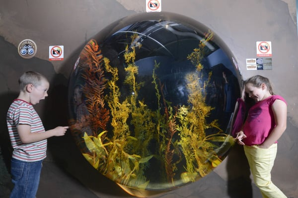 Seahorse Safari opens this week at SEA LIFE Sydney Aquarium