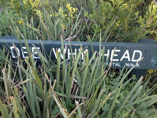 Dee Why Walk-11