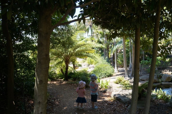 Playground at mt annan botanic gardens jungly area
