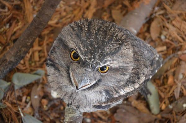 Australia Walkabout Wildlife Park Sydney