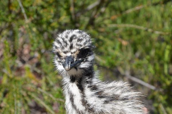Australia Walkabout Wildlife Parl
