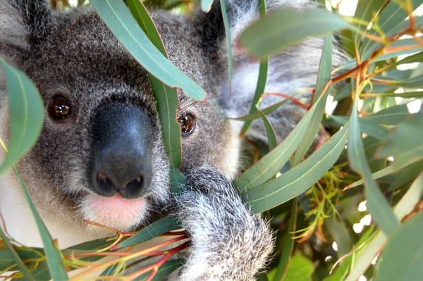 pic koala-blog