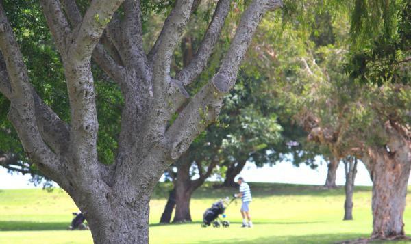 1 Palm Beach Golf Club