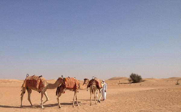 Dubai stopover family camel desert