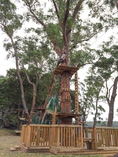 Nowra Trees Adventure