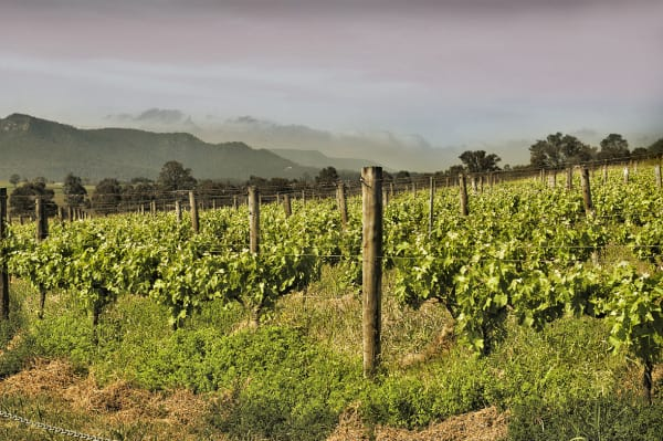 Four Lovely Wineries in Broke Fordwich in The Upper Hunter Valley – A Beginners' Guide