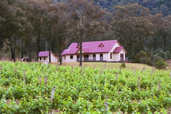 vineyard & Cellar Door 2