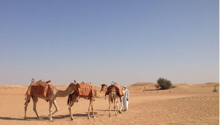 Camels 708 400