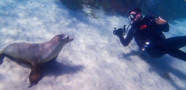 Greg sea lions
