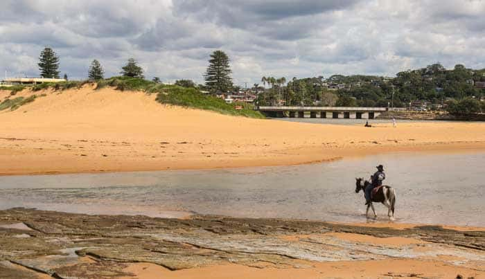 North Narrabeen lagoon entrance horse