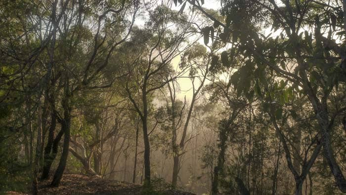 Sunrise fog trees_0003_1