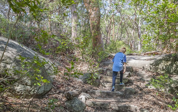 kid friendly bush walks Sydney