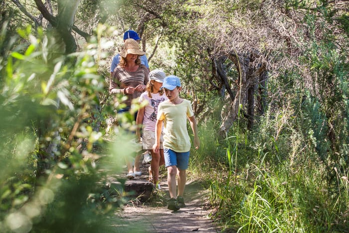 Sydney Family Nature Walks