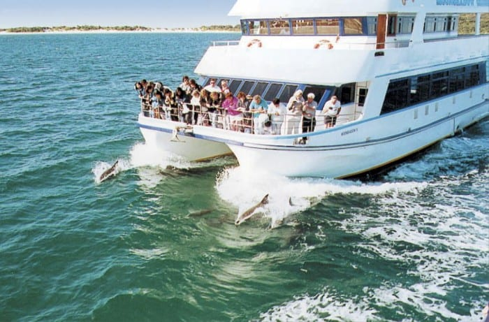 4.dolphin-watching-cruise-from-port-stephens-32772