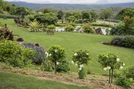 Maleny Botanic Gardens Bird World_44