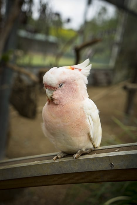 Maleny Botanic Garden and Bird World