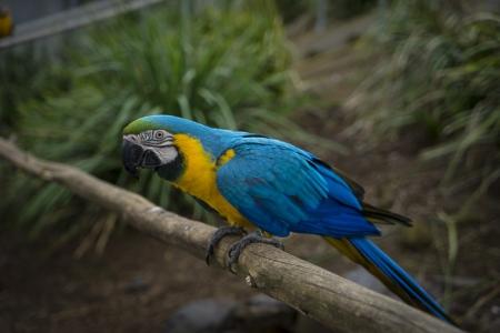 Maleny Botanic Gardens Bird World_55