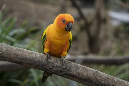 Maleny Botanic Gardens Bird World_56