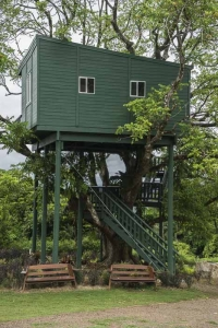 Maleny Botanic Gardens Birld World_tree house