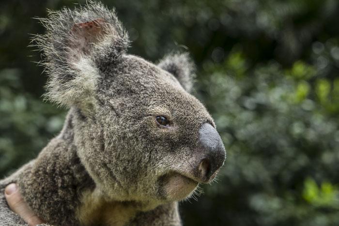 Australia Zoo for kids_11