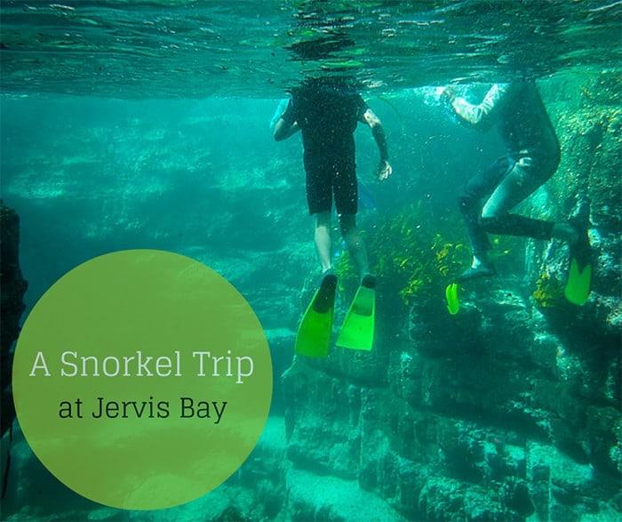 snorkel trip Jervis bay