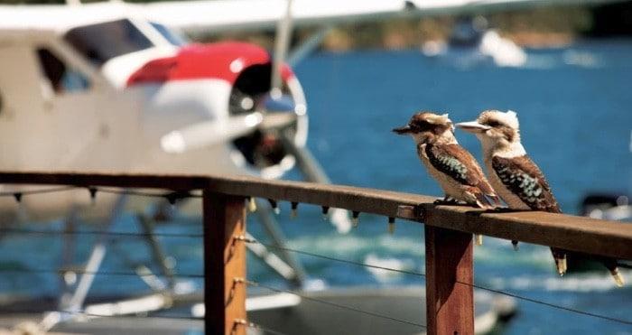 Jonahs lunch seaplane