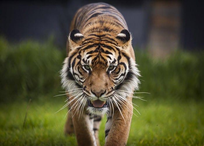 Symbio Wildlife Park Helensburgh_14