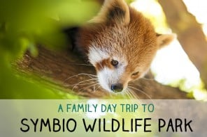 A Family Day Trip To Symbio Wildlife Park