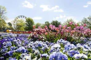 Floriade 2016:  Celebrate Spring in Canberra