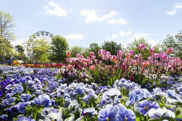 Floriade 2016 Canberra_1