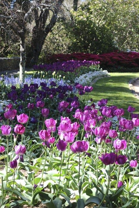 everglades-garden-leura-_9