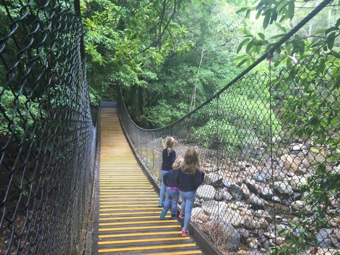 Minnamurra Rainforest