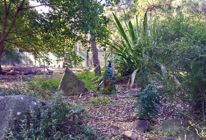 Auburn Botanic Gardens Fauna Reserve