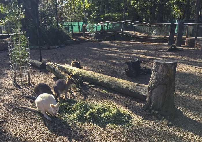 Auburn Botanic garden Fauna Reserve