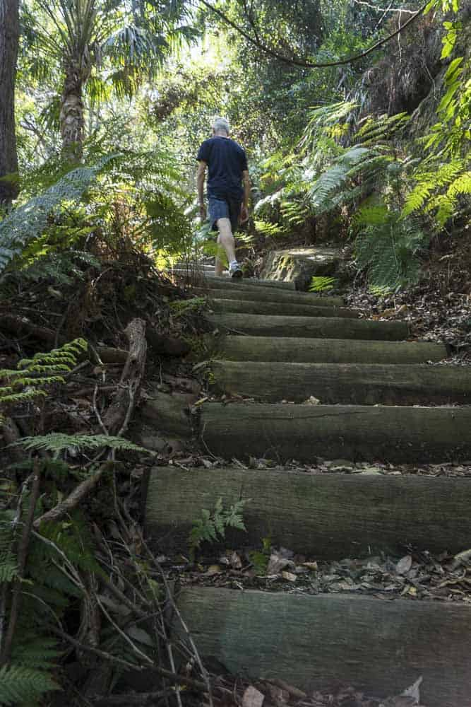 irrawong waterfalls sydney walks