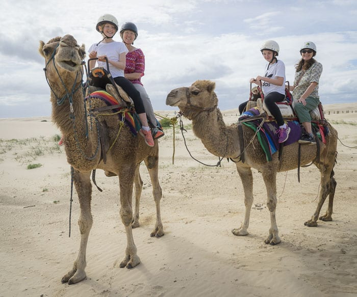 camels port stephens with kids things to do