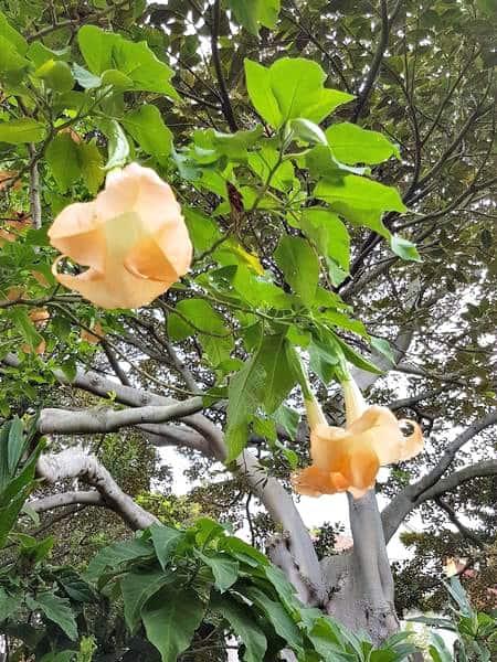 Flowers Wendys Secret Garden