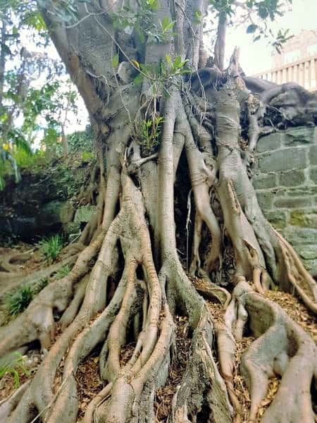 Tree roots in Wendy's Secret Garden