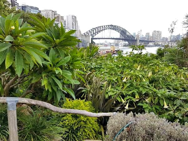 Wendy's Secret Garden Harbour bridge views