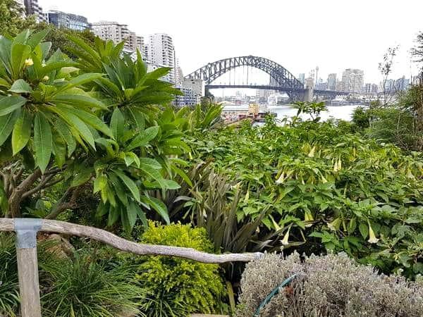 Wendy's Secret Garden Harbour bridge views