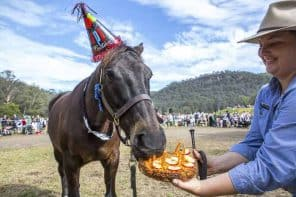 The Horses Birthday Festival Saturday 28th + Sunday 29th July at Glenworth Valley