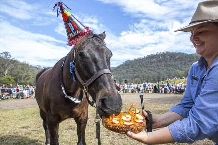Glenworth Valley Outdoor Adventures Horses Birthday Festival