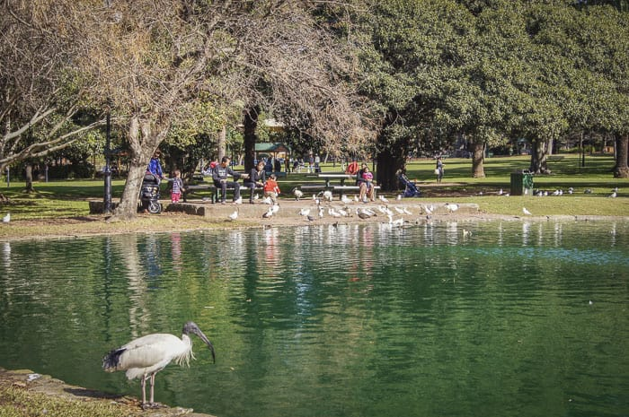 Burwood park duck pond