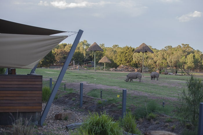 Zoofari Lodge views western plains zoo