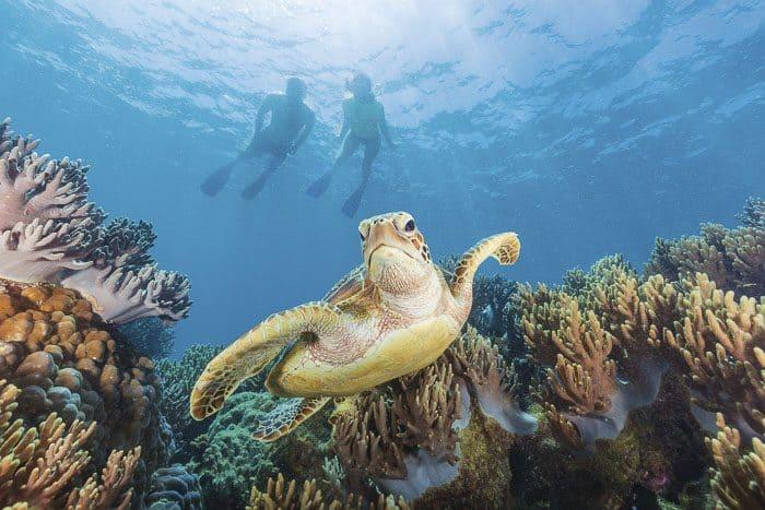 cairns reef cruises michaelmas cay