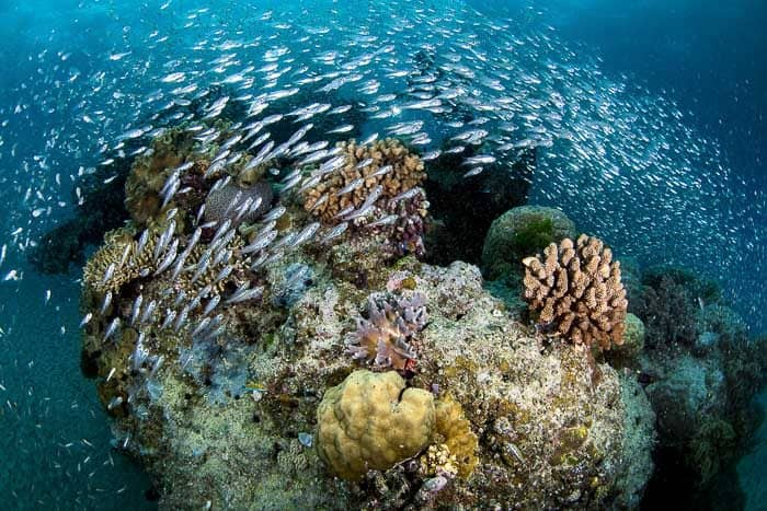 Great Barrier reef trips with kids image reef fish