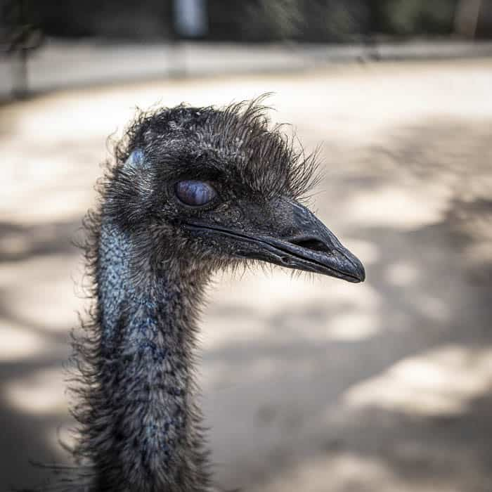 emu at central gardens merrylands