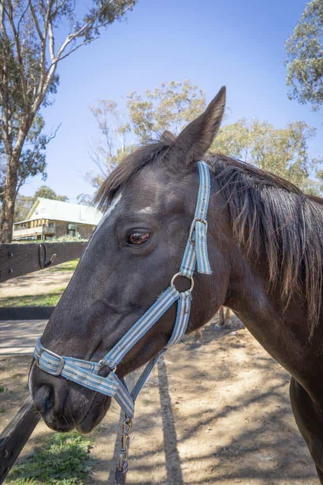 horse riding bathurst